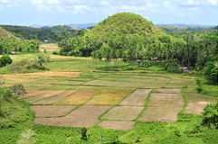 Rice Paddies in the tropics Stock Images