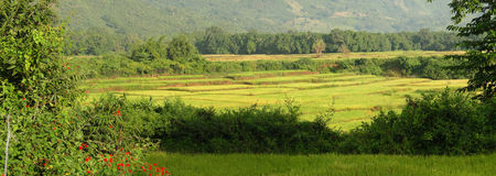 Rice paddies in valley Stock Photography