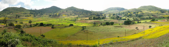 Rice paddies in valley of the Eastern Ghats. Orissa in India Stock Photo