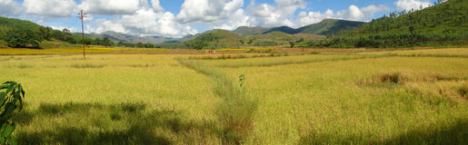 Rice paddies in valley of the Eastern Ghats Royalty Free Stock Images