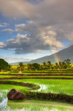 Rice Paddy. Sun rising over a rice field in the Philippines with a rainbow and mountain in the background Stock Photography