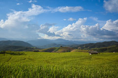 Rice paddy with blue sky. Beautiful Rice paddy in Chiang Mai, Thailand stock photography