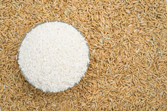 Rice on paddy Royalty Free Stock Photo