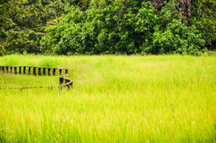 Rice paddy in Cambodian countryside, Siem Reap, Cambodia Royalty Free Stock Photos