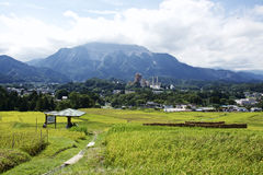 Rice paddy and a cement plant Stock Photo