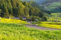 Free Rice Paddy Farm On Sunset. Yotsuya, Aichi Prefecture, Japan Royalty Free Stock Images - 80309209