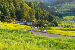 Rice paddy farm on sunset. Yotsuya, Aichi prefecture, Japan Royalty Free Stock Images