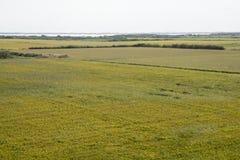 Rice paddy. Field at the albufera. Ecologic way Royalty Free Stock Photos