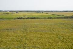 Rice paddy. Field at the albufera. Ecologic way Royalty Free Stock Photo