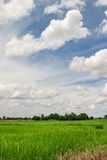 Rice Paddy field and Cloudy Royalty Free Stock Photo