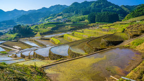 Rice paddy field in Japan Stock Photography