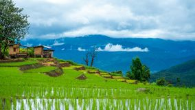 Rice Paddy Field Mountain View stock photography