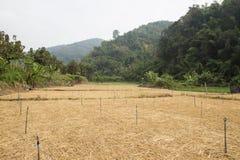 Rice paddy field Stock Photos