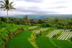 Rice Paddy Fields, Bali Stock Photography