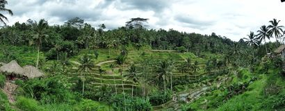 Rice Paddy Fields in Bali, Indonesia Royalty Free Stock Image