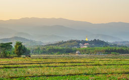 Rice paddy fields Stock Images