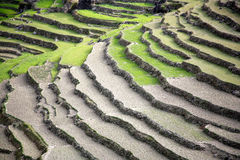 Rice paddy fields in the himalayan Royalty Free Stock Images