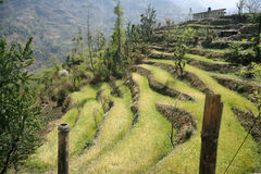 Rice paddy fields in the himalayan hills Royalty Free Stock Photos