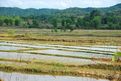 Rice paddy fields near the Plain of Jars archaeological site. The fields conceal a hidden danger from unexploded bombs from the Vietnam War which still kill royalty free stock image