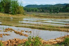 Rice paddy fields near the Plain of Jars archaeological site. The fields conceal a hidden danger. From unexploded bombs from the Vietnam War which still kill royalty free stock photography