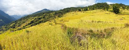 Rice or paddy fields in Nepal Himalayas Royalty Free Stock Photos