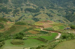 Rice paddy fields terraces in Vietnam Royalty Free Stock Photography