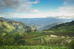 Rice paddy fields in China. Green mountains and rice fields in Yuangyang Stock Photos