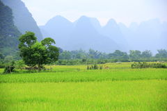 Rice paddy and hills Stock Image