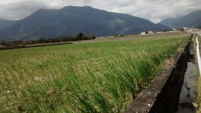 Rice paddy landscape
