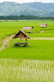Rice paddy in luang namtha valley, Laos Royalty Free Stock Photography