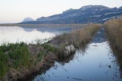 Rice paddy moss. At La Marina Alta - Marjal de Pego-Oliva Stock Image