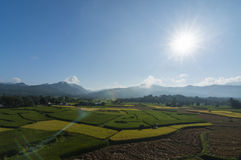 Rice paddy in Nan,Thailand Stock Image