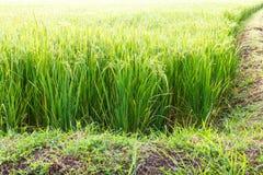 Rice paddy soil Stock Photos