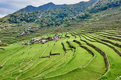 Rice paddy terrace fields  Philippines. Rice paddy terrace fields between banaue and batad infugao Luzon in Philippines Stock Photos