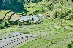Rice paddy terrace fields  Philippines Royalty Free Stock Photos