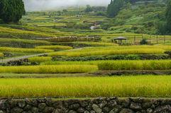 Rice paddy terraces on foggy morning Stock Photos