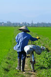 Rice Paddy Worker. With bicycle in Hoi An, Vietnam Royalty Free Stock Photo