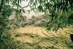 Rice paddys in the jungle of vietnam. Beautiful Royalty free stock photo. rice paddys in the jungle of vietnam royalty free stock images