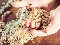 Rice in palms Stock Image