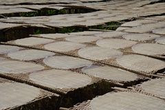 Rice pancakes drying on the sun in the rice noodles factory. Stock Photo