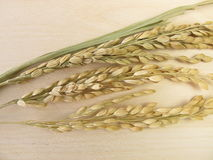 Rice panicles Royalty Free Stock Photography
