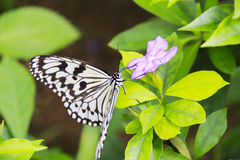 Rice paper butterfly Royalty Free Stock Photography