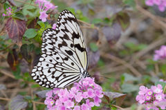 Rice paper butterfly on pink flower Stock Photo