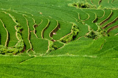 Rice patty terraces Royalty Free Stock Photography