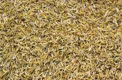 Rice peel after harvest and hull Royalty Free Stock Photos