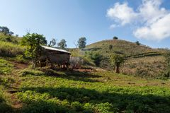 Rice Picker`s House. Shot in Myanmar Royalty Free Stock Photography
