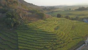 Rice Plant Terracing Concept stock photo