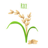 Rice plant, vegetarian food. Green harvest, oryza wheat. Vector illustration Royalty Free Stock Photos