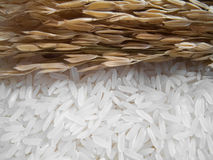 Rice plant and white rice , uncooked raw cereals Stock Photography