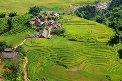 Rice plantation Royalty Free Stock Photography